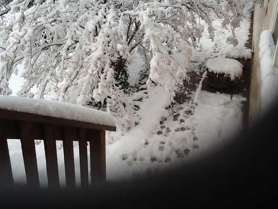 A photo taken of the snowfall in Jamestown, Calif. (Dec. 7, 2013)