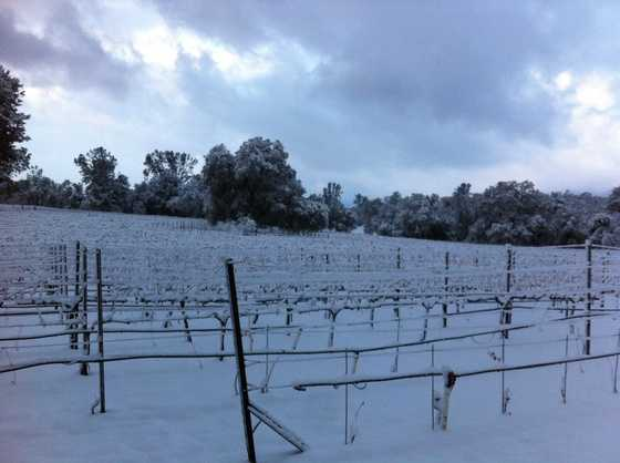 Snow covers a vineyard in San Andreas, Calif. (Dec. 7, 2013)