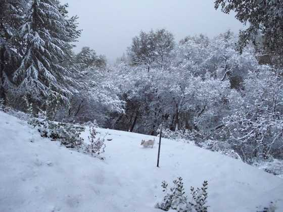 """This photo was titled """"Bruce and Jennie's front yard in Applegate"""". (Dec. 7, 2013)"""