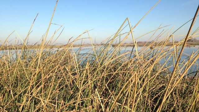 delta, twin tunnels, Sandhill cranes, water supply, Delta's natural habitat, blue herons, fish, controversial plan, water, water for southern california, Sacramento-San Joaquin Delta, water supply