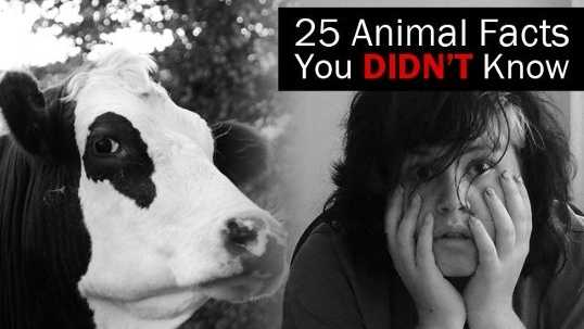 animal-facts-title-jpg.jpg