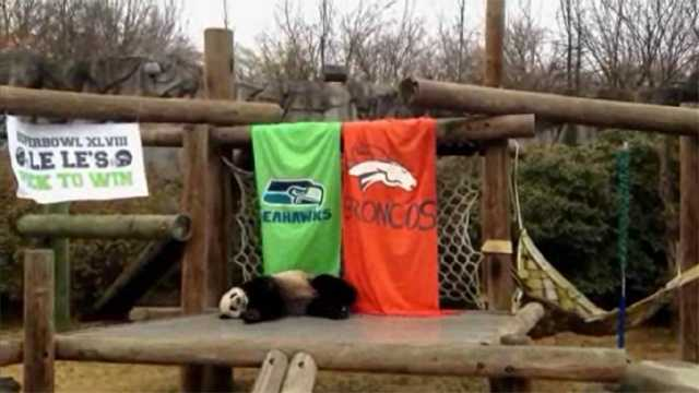 Panda picks Super Bowl winner