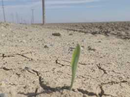 As President Obama prepares to visit the Central Valley, take a look at five actions the president will announce Friday to help California's drought-stricken farming regions.