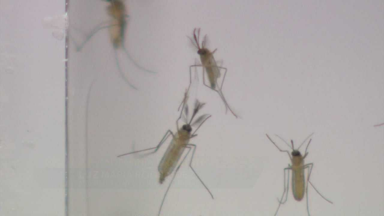 It's not the typical mosquito season in Northern California, but experts said Tuesday it's not too unusual to see a surge in the flying insects in the middle of winter.
