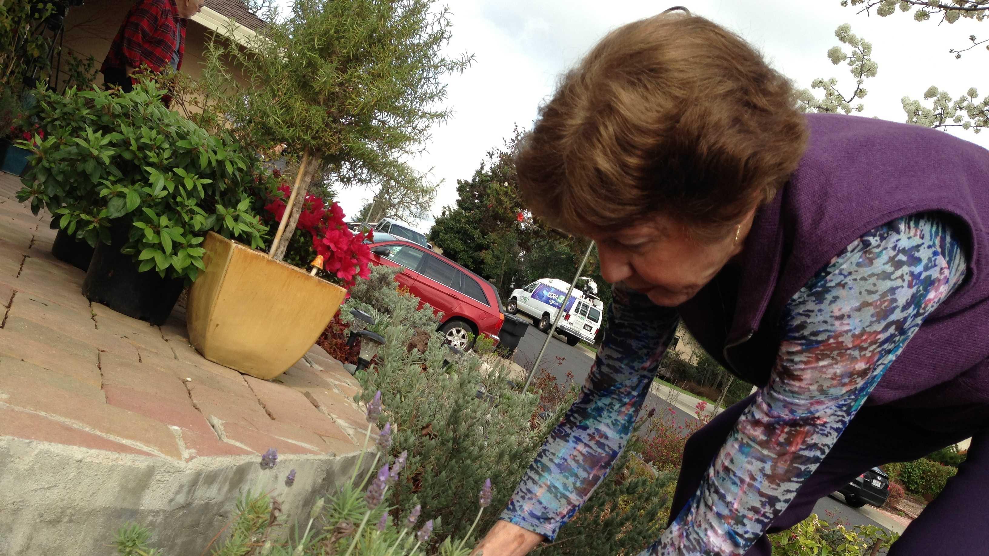 Sharon Schlesinger tends her drought-tolerant yard in Roseville.