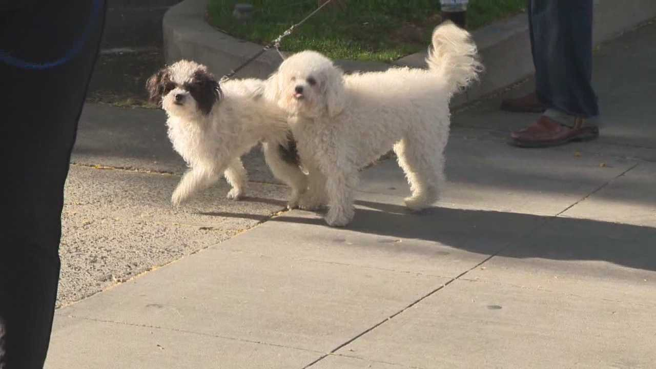 Midtown businesses hope to open a pop-up dog park