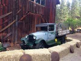 During the Gold Rush, Daffodil Hill was a regular stopping place for teamsters hauling timber from the Sierra.