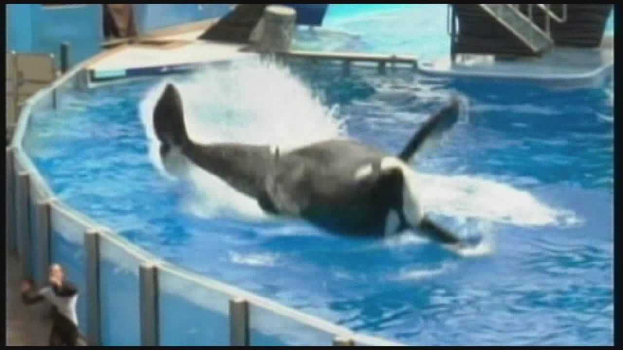 Opponents of orca shows to deliver petition today at Capitol