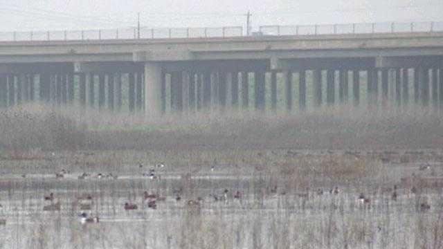 12. Visit the Vic Fazio Yolo Wildlife Area -- The wildlife area between Sacramento and Davis along Interstate 80 covers 25 square miles and is home to nearly 200 species of birds in the middle of a rich agricultural area.