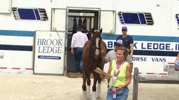 California Chrome arrives at Pimlico Race Course in Baltimore, Maryland