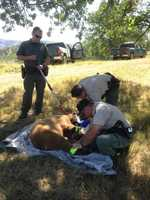 The bear did not cause any property damage, according to the department.