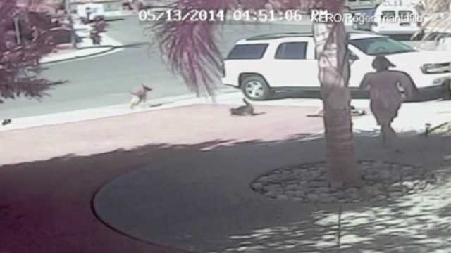 Hero cat dog attack