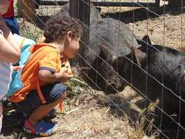 What: A Day on the FarmWhere: Soil Born Farms American River RanchWhen: Sun 10am-3pmClick here for more information on this event.