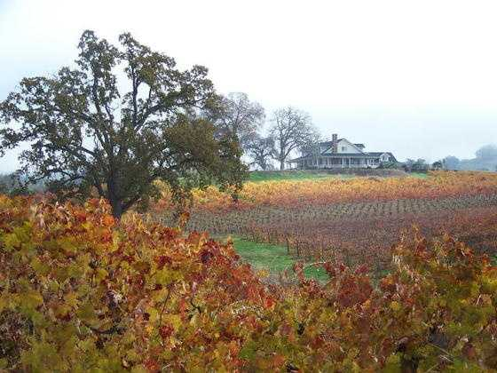 10. Amador -- Amador wine country is home to more than 25 wineries, including Domaine De La Terra Rouge, Vino Noceto, Andis Winery and Amador Cellars. Many limousine companies set out from Sacramento to the flourishing vineyards.