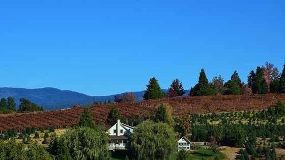 1. Apple Hill -- The crisp mountain air at Apple Hill in El Dorado County attracts visitors year-round to see the vineyards and orchards beaming with delicious food and drink. Many visitors come to enjoy the fun family farms and gorgeous golf course.
