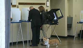 Brown's dog, Sutter, waits as the governor casts his ballot Tuesday.