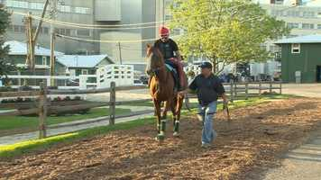 8. Following California Chrome's win at the Kentucky Derby, the horse's owners turned down a $2.1 million offer for Chrome's mother, Love the Chase, who is also owned by Martin and Coburn.
