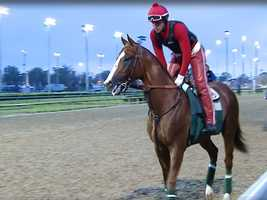 15. Before the Kentucky Derby, each horse was given a saddle cloth to wear during workouts, but California Chrome's name was misspelled as Califorina. He wore it on the first day anyway. When he arrived to prepare for the Preakness Stakes, the track gave him two cloths -- one with the misspelling and the other with the correct spelling. Chrome's trainer then asked for a misspelled cloth in addition to a correctly spelled one when they arrived for the Belmont Stakes.