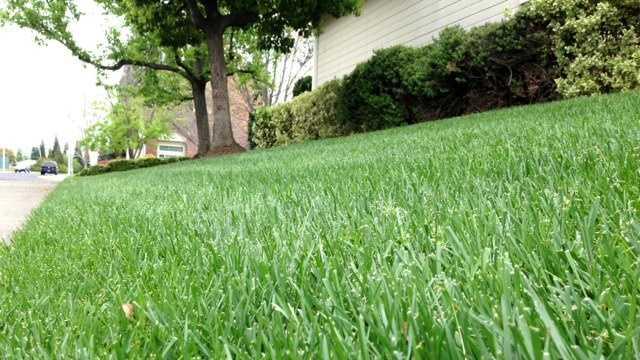 Roseville lawn
