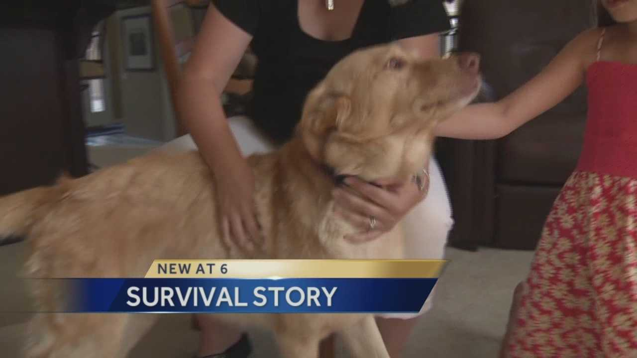 The Bruan Family of El Dorado Hills got quite a surprise when their dog was found safe almost two years later.