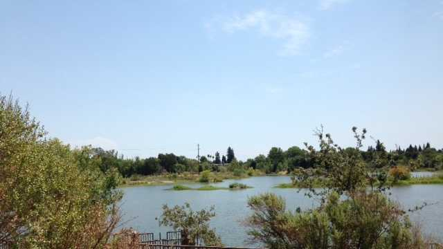 American River Parkway (July 16, 2014)