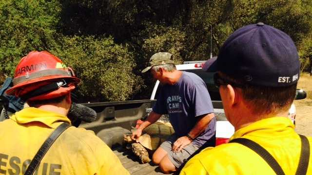 A 200-pound tortoise was rescued from the Sand Fire in Amador County.