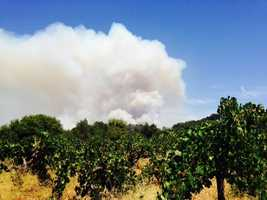 A plume of smoke rises over a vineyard in Amador County. (July 27, 2014)