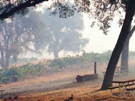 Smoke from the Sands Fire drifts across vineyards at Story Winery in Amador County. (July 27, 2014)