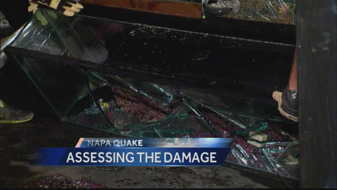 A fish store in downtown Napa was hit hard by the Napa earthquake and was working to save any fish they could after almost all of their aquariums broke during the tremors.