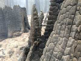 The Forest Service said Thursday the King Fire may soon reach area burned by last year's American Fire (Sept. 18, 2014).