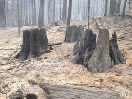 Here's part of the King Fire burn zone in Placer County (Sept. 18, 2014).