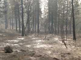 Forest land charred by the King Fire. (Sept. 19, 2014)