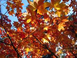 3. Leaves changing color: As the weather begins to change, the City of Trees turns into a sea of orange, red and yellow with a variety of shades of green.