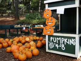 6. Searching for a pumpkin to carve: Picking out a perfectly shaped pumpkin to carve out a funny face or creative design is a traditional fall activity, especially with all the local pumpkin patches like Goblin Gardens Pumpkin Patch in Sacramento, Branco Farms in Roseville or Bobby Dazzler's Pumpkin Patch in Davis.