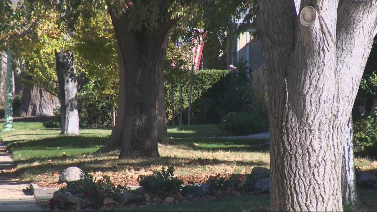 Water conservation is good but arborists say lack of water may be killing you trees.