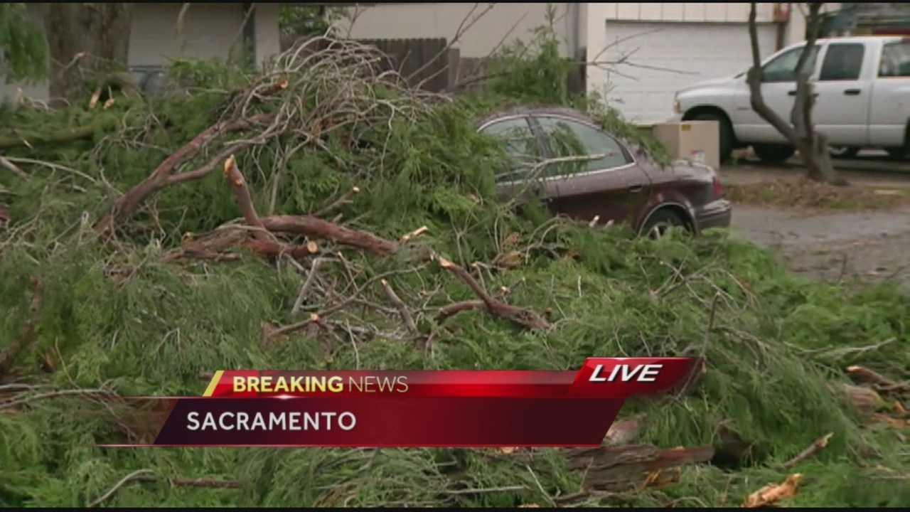 Large tree falls on Trujillo Way.