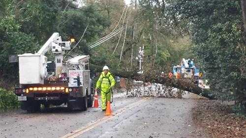 PG&E crews work to repair power lines taken down by a large oak tree in North Stockton. (Dec. 15, 2014)