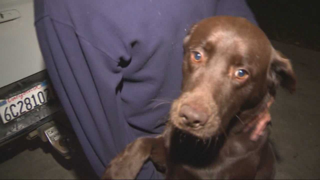 A Sacramento man was sleeping in his home on 40th Avenue when a fire broke out in his home, but thanks to his dog Buddy, he was able to make it out alive.