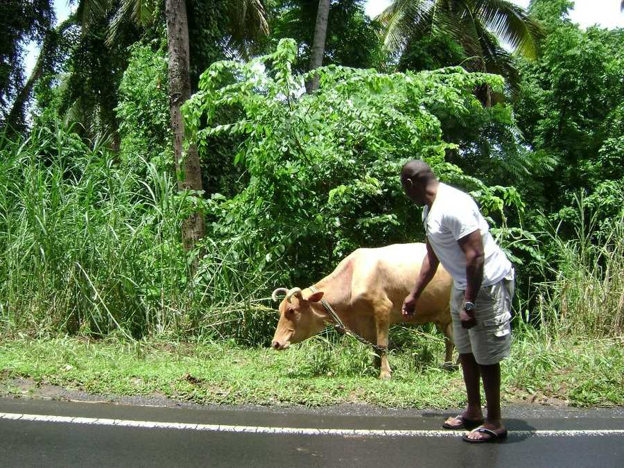 23.) My heritage is Jamaican. When I travel back, I always say hello to local pets.