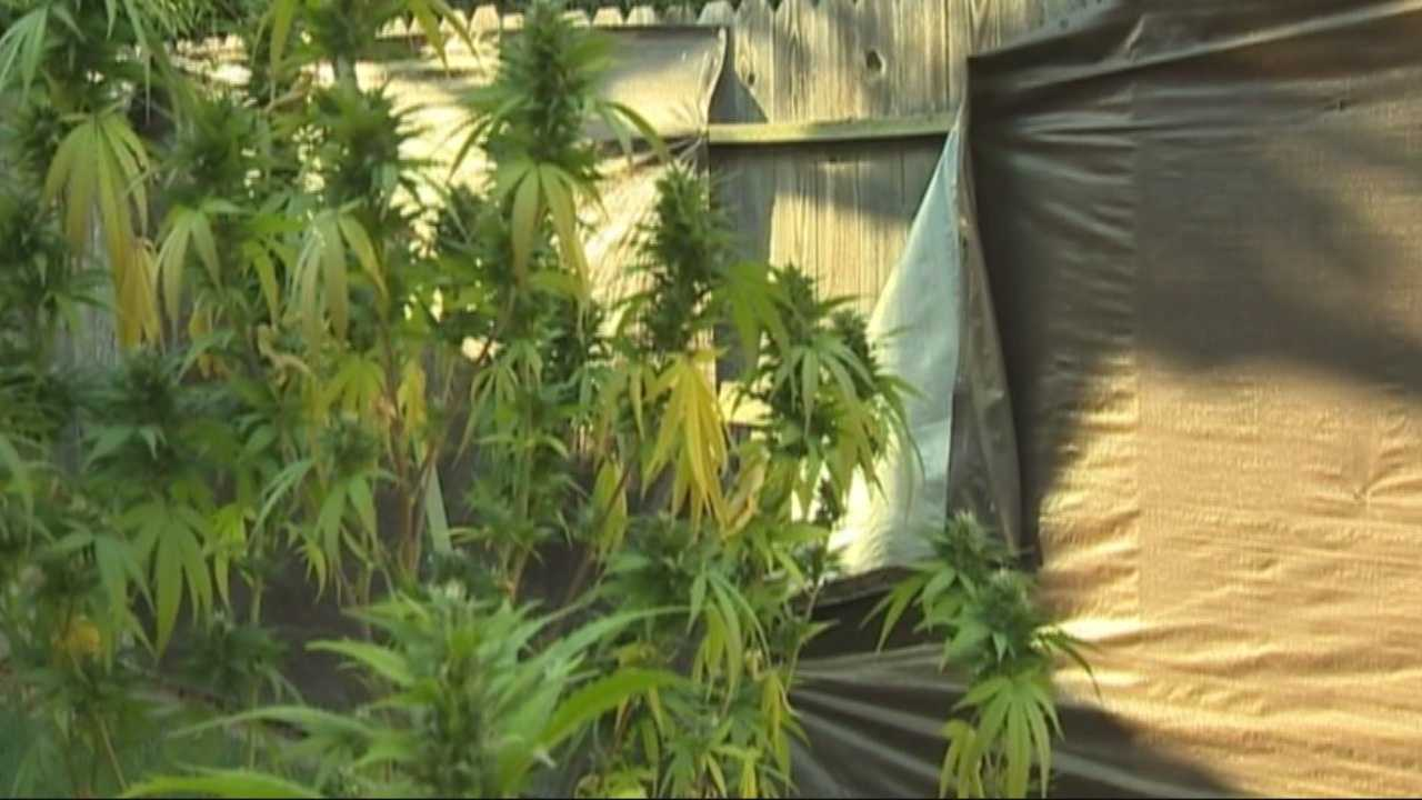Yuba County is looking to implement a tougher marijuana ordinance that may not only affect medical marijuana users, but will likely take a huge toll on the county budget.