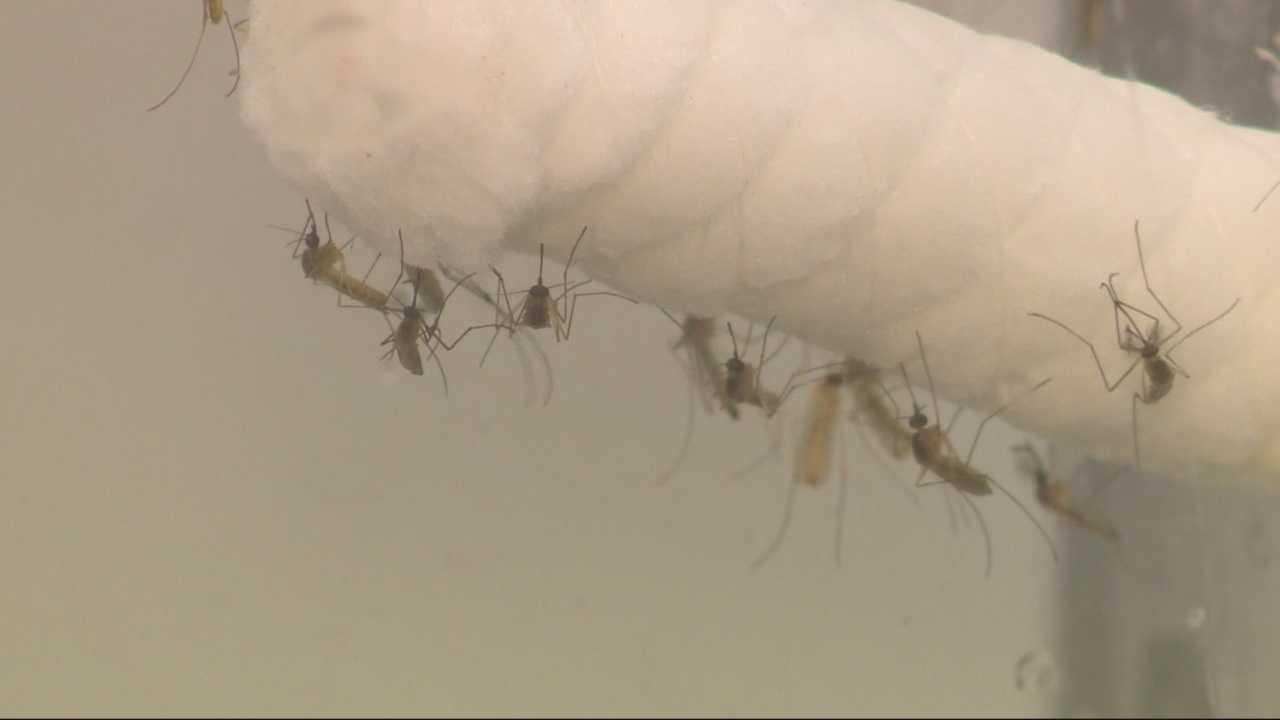 Last year Sacramento County had 10 West Nile cases.