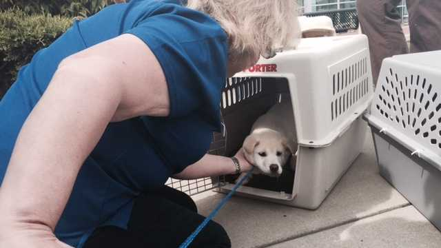 Dozens of dogs rescued from a South Korean meat farm were rescued by Humane Society International and Change for Animals Foundation. On Friday, the puppies arrived in Sacramento. (March 20, 2015)