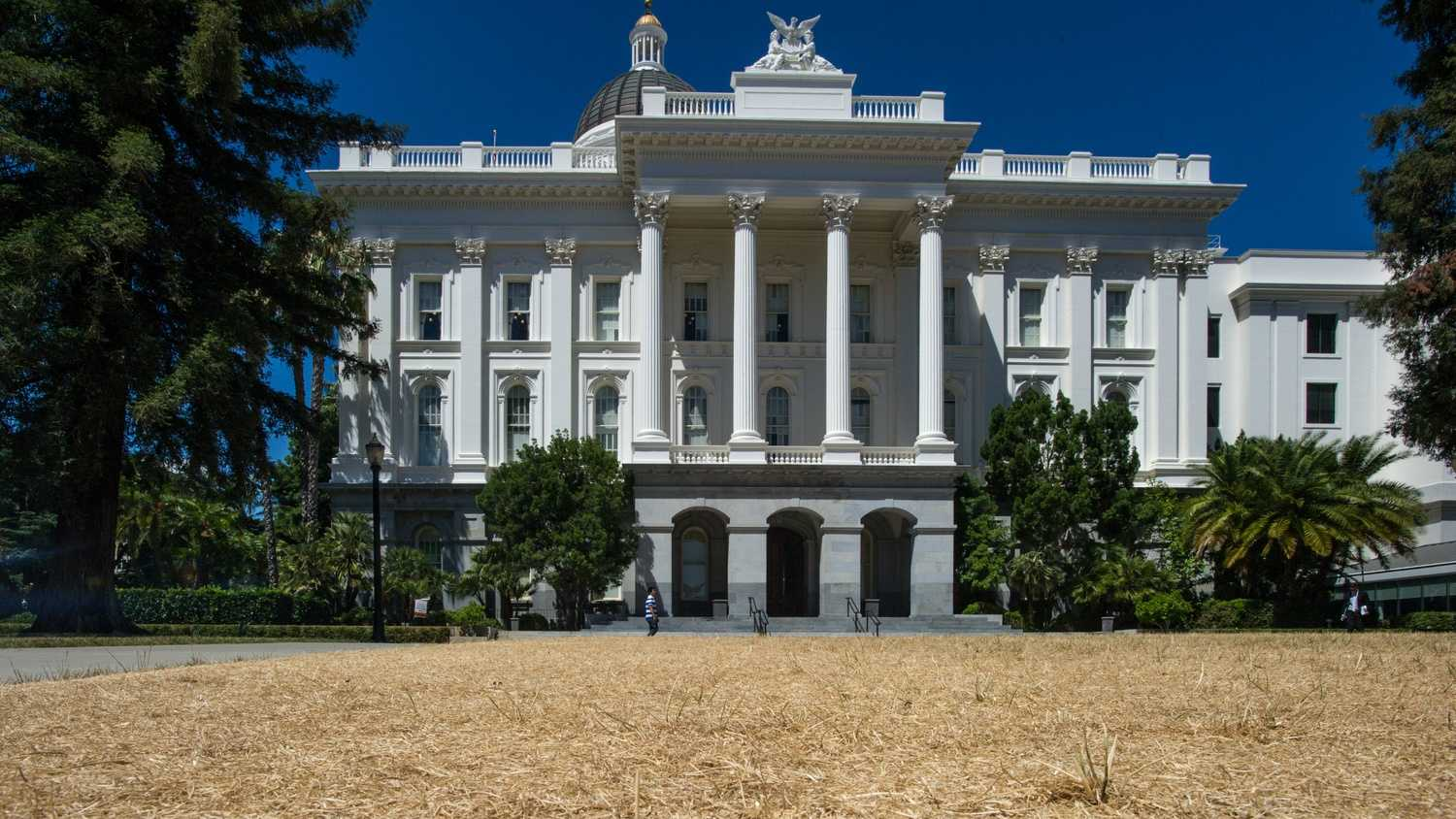 This photo of dead grass in front of California's state Capitol.