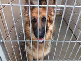 The animal shelter is offering 50 percent off all adoptions until the end of April. (April 22, 2015)