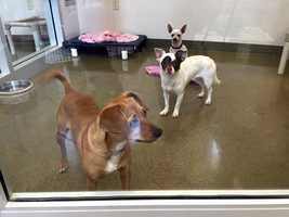 The Sacramento County animal shelter is full of dogs, dogs and more dogs in need of good homes, according to the The Sacramento Animal Care and Control. (April 22, 2015)