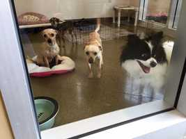 The Sacramento County Animal Shelter is located at3839 Bradshaw Road in Sacramento. It is open Wednesday, Thursday and Friday from 12:30 p.m. to 5:30 p.m., and Saturday and Sunday from 12 p.m. to 4:30 p.m. (April 22, 215)
