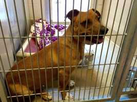 In addition to the discount, any dogs that have been at the shelter longer than 30 days have a special adoption price of just $20. (April 22, 2015)