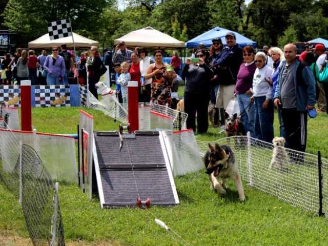 What: Pet-a-PaloozaWhere: Rusch ParkWhen: Sat 10am-4pmClick here for more information on this event.