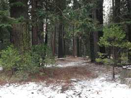 A dusting of snow on the ground at about 5,000 feet off Highway 50 in the Sierra. (May 7, 2015)