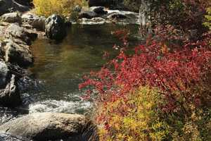 Here's the south fork of the Stanislaus River, after one viewer took a drive up Highway 108, searching for pretty colors. This was snapped in the Strawberry area.